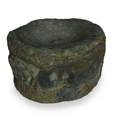 Plesiosaur Vertebra